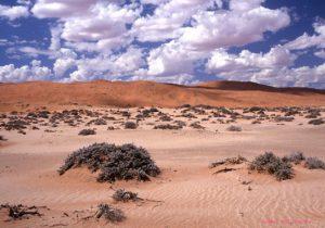 Namibia Wueste