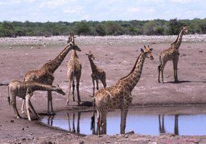 Etosha Wasserstelle