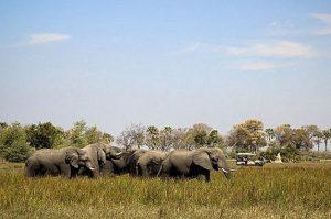 Botswana_Okavango_Abu_Camp