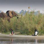 Baines Camp Botswana