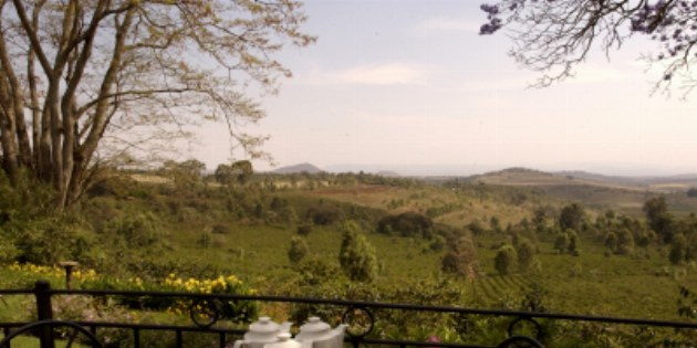 imgs Tanzania/GibbsFarm/