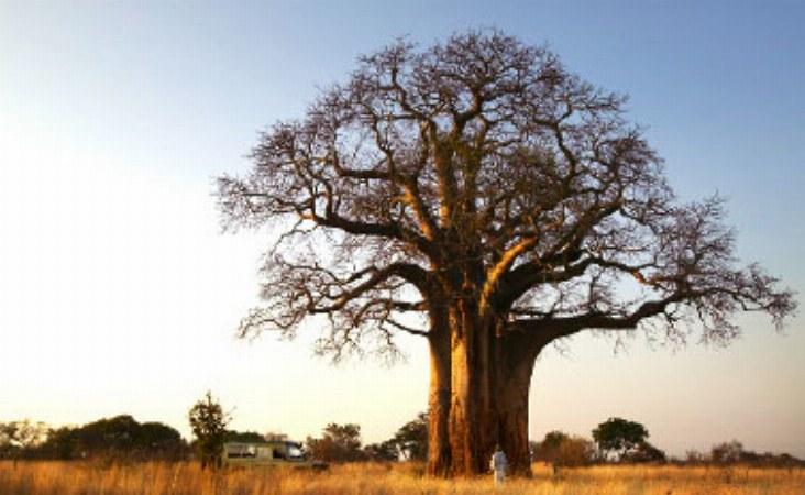 imgs Tanzania/OliversCamp/