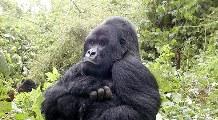 Rundreisen Ruanda