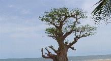 Badeurlaub Senegal