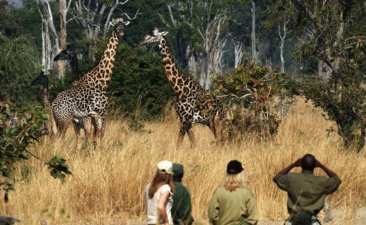 Sambia South Luangwa Nationalpark